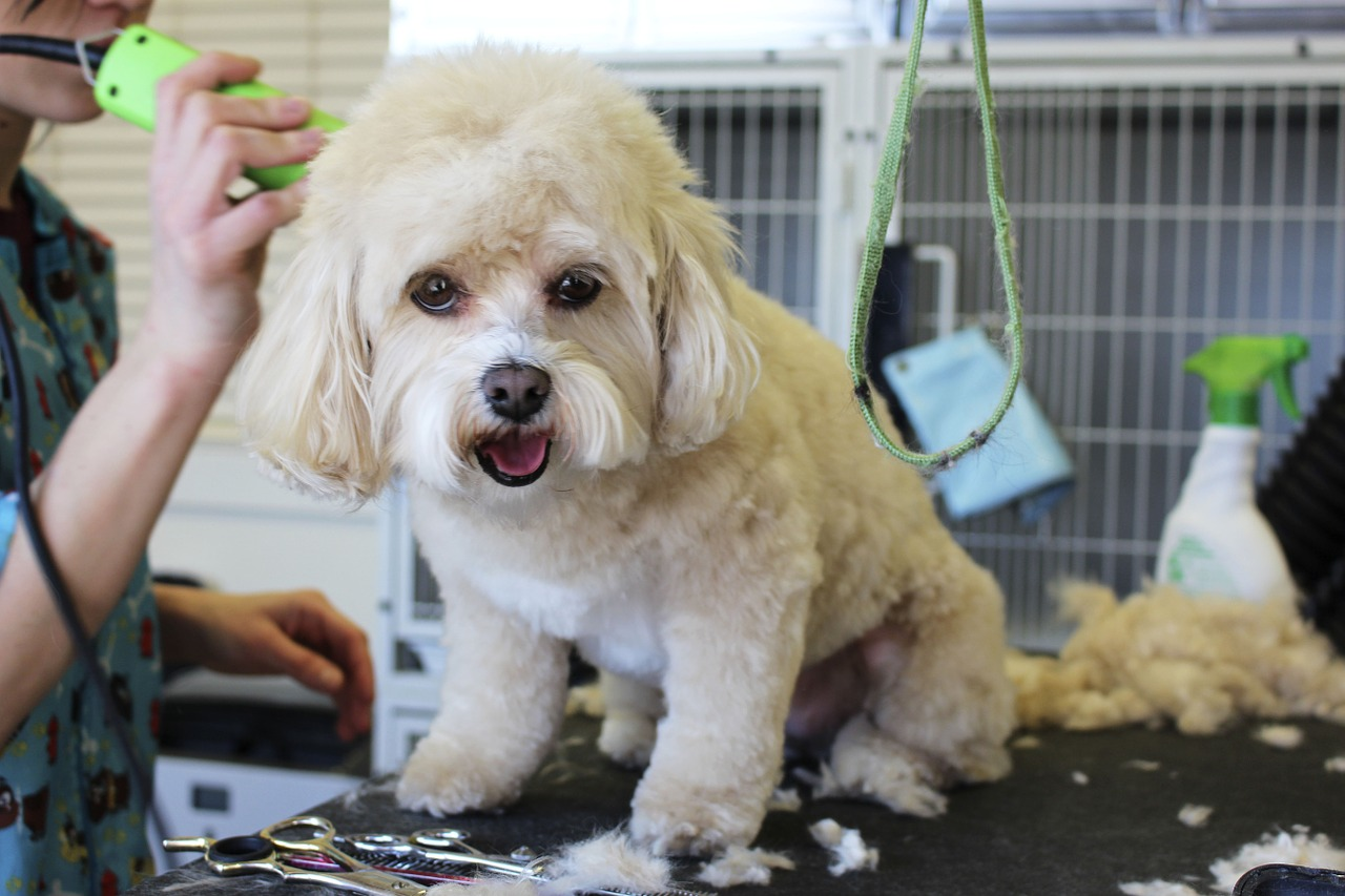 Pet Stylist (Groomer)